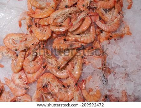 Shrimps on ice - stock photo