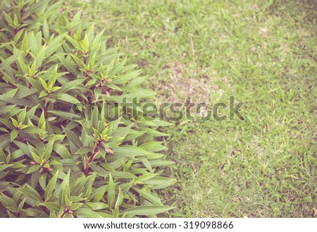 Shrubs in the lawn for background. - stock photo