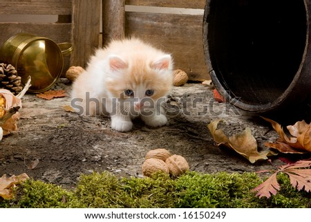 Shy little kitten exploring the garden - stock photo