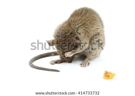 Shy mouse - stock photo