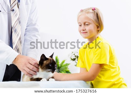 Siamese cat lying on table and checked up by veterinarian