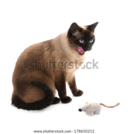 siamese cat with toy mouse - stock photo