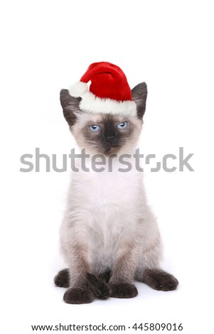 Siamese Kitten on White Looking Mad With Santa Hat - stock photo