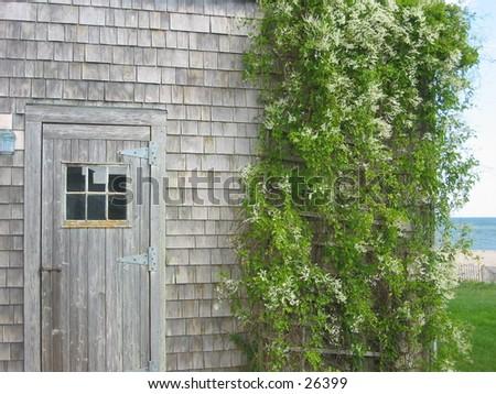 siasconset shed - stock photo