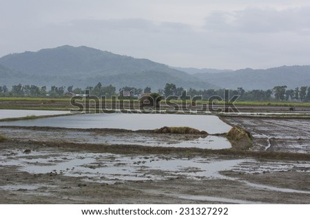 Sibalom, Philippines - October 16, 2014: Rice paddys ready to be planted on Panay island in Visayas in the Philippines - stock photo