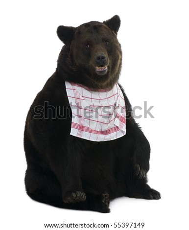 Siberian Brown Bear, 12 years old, against white background - stock photo