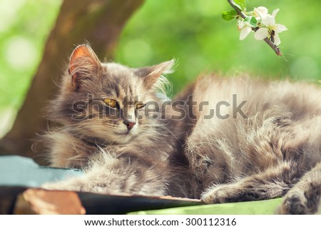 Siberian cat relaxing under tree - stock photo