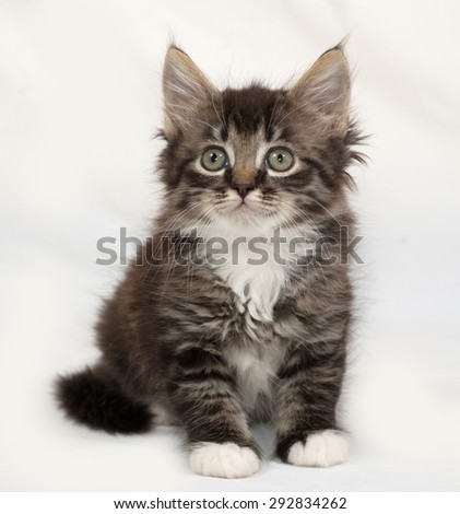 Siberian fluffy tabby kitten sitting on gray background - stock photo