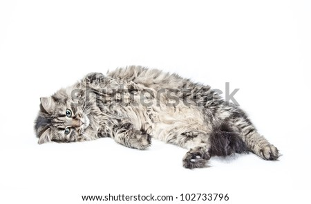 Popular male cat names
