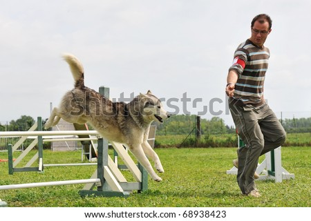 siberian husky and man in a competition of agility - stock photo
