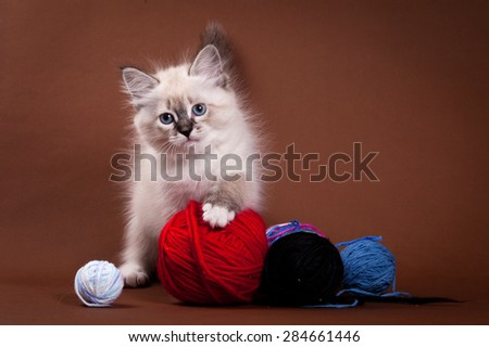 Siberian kitten and a ball of wool - stock photo