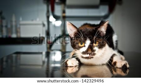 Sick cat at the veterinarian - stock photo