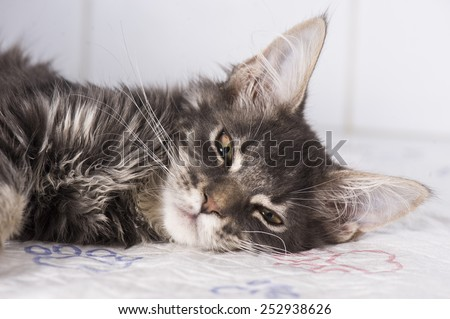 Sick cat in animal hospital - stock photo