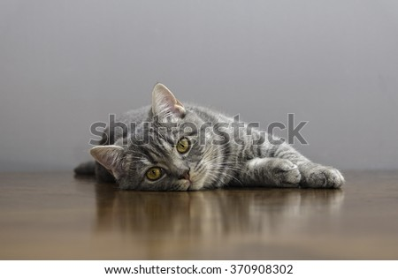 sick cat on a table with medicines - stock photo