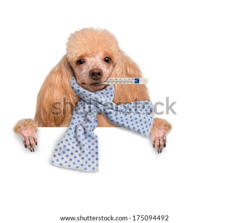 Sick dog. - stock photo