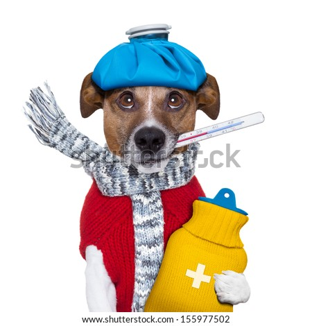sick dog with fever and a hot water bottle - stock photo