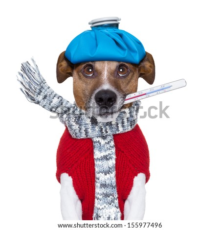 sick dog with fever wit an ice bag on head - stock photo