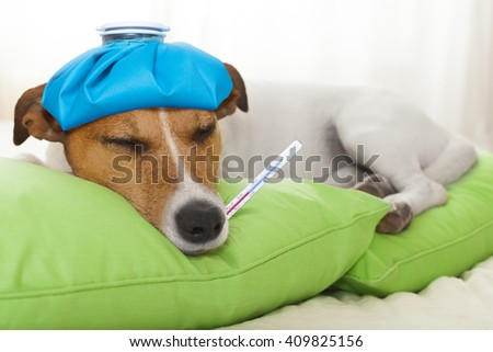 sick ill dog in bed sleeping or resting - stock photo