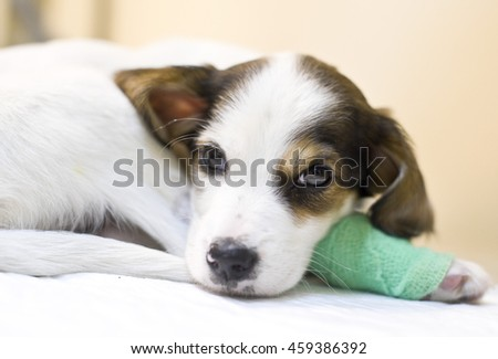 Sick puppy in animal hospital - stock photo
