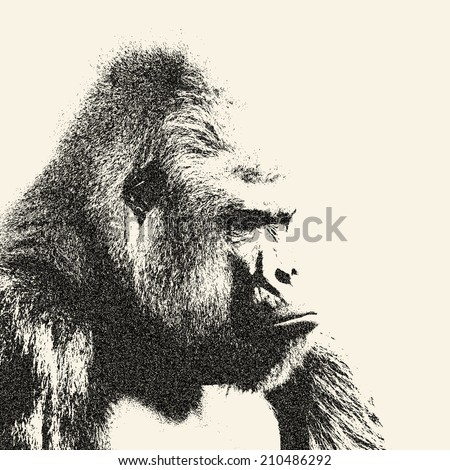Side face portrait of a gorilla male, severe silverback, on sepia background. Menacing expression of the great ape, the biggest monkey of the world. Amazing illustration with old worn out effect.   - stock photo