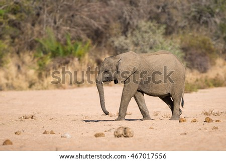 Side profile of African elephant in African wilderness during daytime