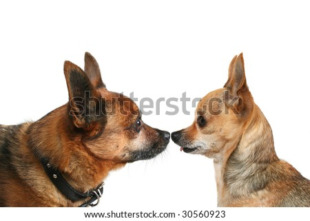 side shot of a small dog - stock photo