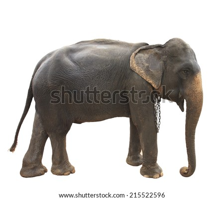 Front view elephant Stock Photos, Images, & Pictures ...