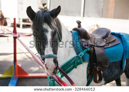 Side view head shot of a pony ready for riding. Closeup of a white and gray pony horse. - stock photo