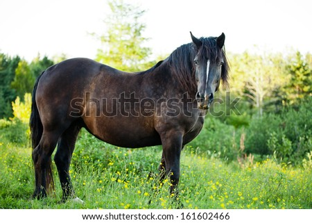 Side View of a Beautiful Strong horse in long grass - stock photo