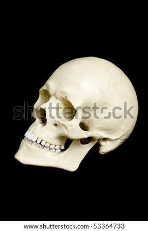 Side view of a fake skull isolated on black background - stock photo