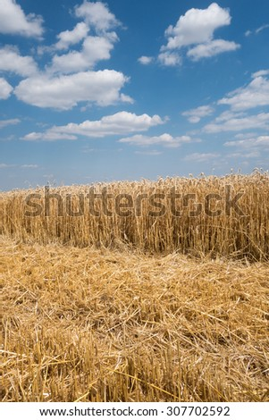 Side view of a partially harvested wheat field with diagonal course and blue and white sky, taken in vertical format    - stock photo