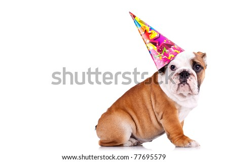 side view of an english bulldog sitting and wearing a party hat with copy space