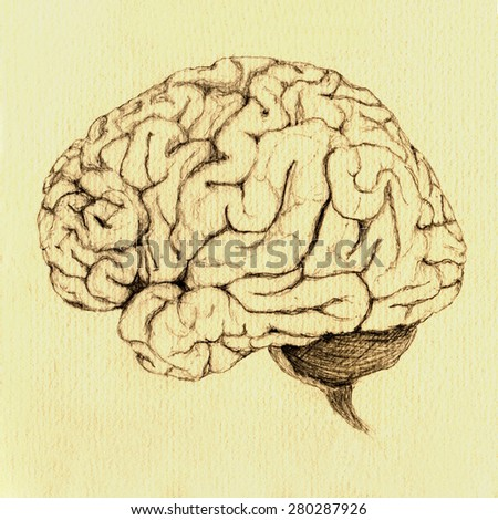 Side view of Brain, Hand drawn sketch in pencil on antiquated paper.  - stock photo