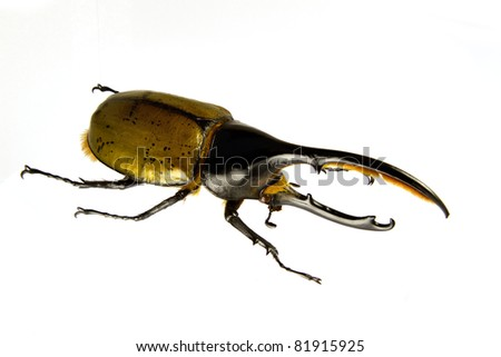 Side view of Dynastes hercules isolated on a white background. - stock photo