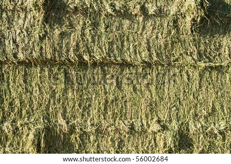 side view of square bales of fresh alfalfa hay - stock photo