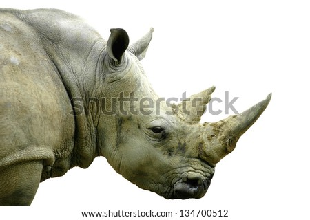 side view of the head of a large white rhino (Ceratotherium simum) - stock photo