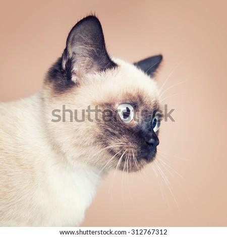 cat biting kittens