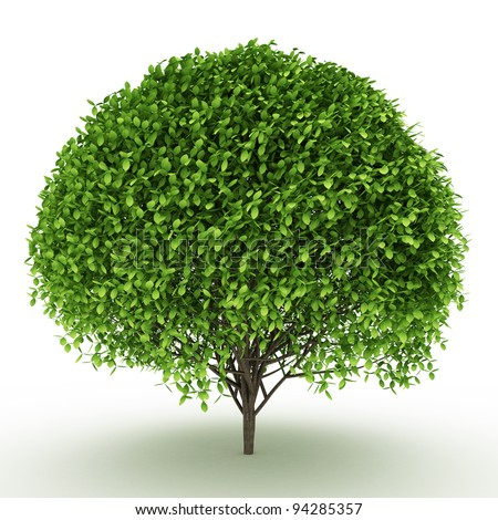 side view of trimed 3d bush isolated on white - stock photo