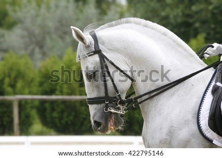 Side view portrait of a grey dressage horse during training outdoors - stock photo