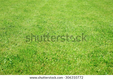 Side view to the grass meadow - stock photo