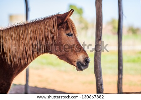 Side-view up of brown female horse - stock photo