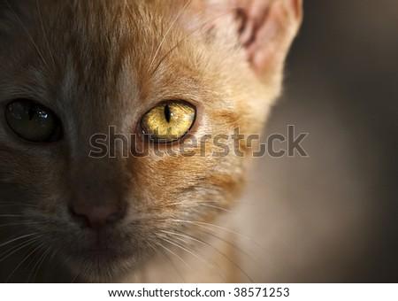 Sidelit portrait of a cute little stray cat - stock photo