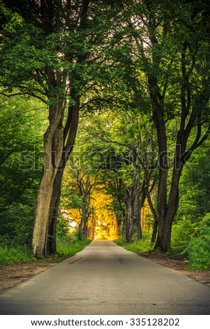 Sidewalk walking pavement alley path with old big trees in park. Beauty nature landscape. Summer walk. - stock photo