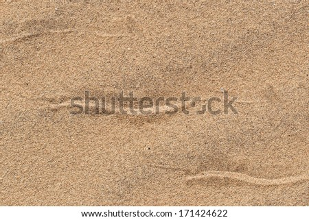 Sidewinding snake tracks across the sand of the dunes at Swakopmund, Namibia - stock photo