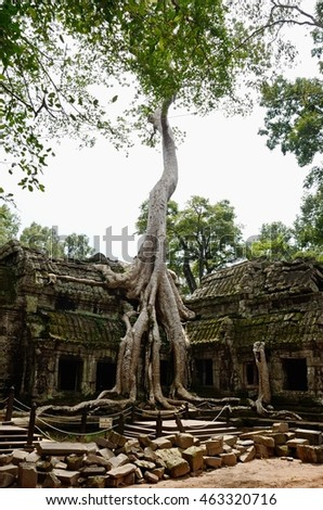 Siem reap, Cambodia. - DEC 21:2012. The Ta Prohm (Taprom) temple in the jungle near Angkor .