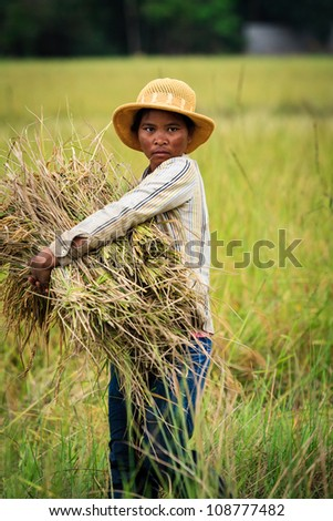 SIEM REAP, CAMBODIA - DECEMBER 28, 2008:  Cambodian woman harvesting rice in field  Angkor Wat, a UNESCO World Heritage Site ion December 28, 2008 in Siem Reap, Cambodia.