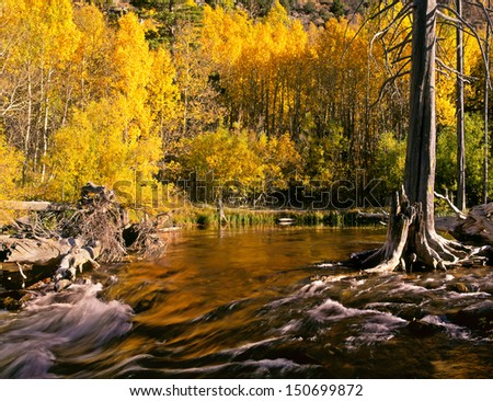Sierras Creek in Autumn - stock photo