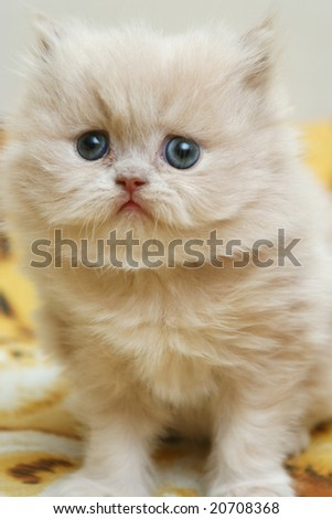 Sight of a small nice fluffy kitten