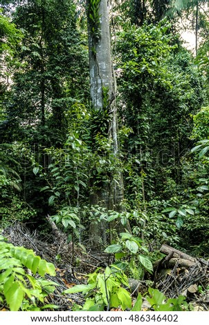 sight of the thickness of the forest in macritchie reservoir in Singapore