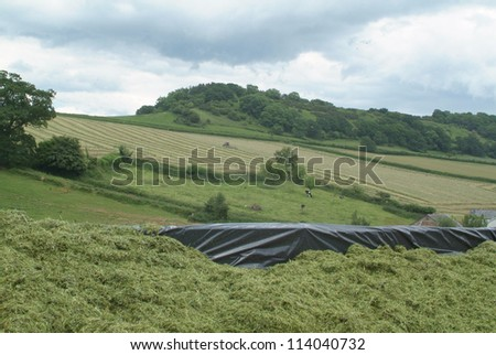 Silage pit with a view of a tractor turning grass for silage - stock photo